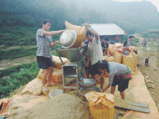 trabajando_el_arroz_en_sapa